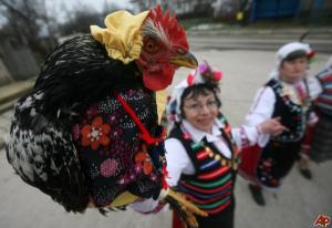 bulgaria-rooster-s-day-2009-2-2-7-4-8