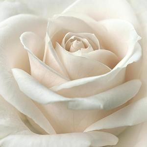 purity-darlene-kwiatkowski